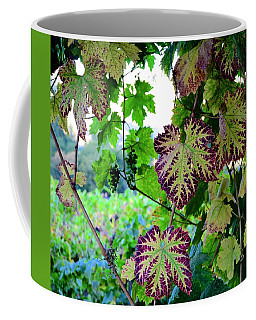 Coffee Mug featuring the photograph The Grape Vine by Corinne Rhode