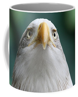 Coffee Mug featuring the photograph The Hunters Stare by Laddie Halupa