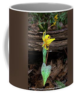 Coffee Mug featuring the photograph The Lone Trout Lily by Barbara Bowen