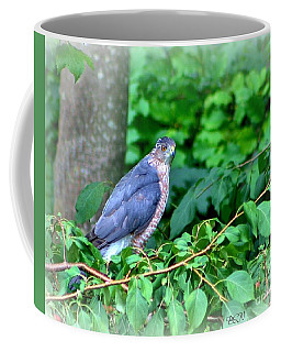 The Merlin Falcon Coffee Mug