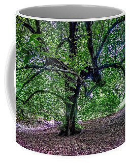 The Old Tree At Frelinghuysen Arboretum Coffee Mug