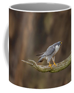 The Peregrine Falcon Coffee Mug