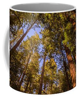 The Portola Redwood Forest Coffee Mug