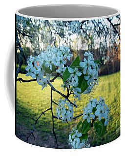 The Promise Of Spring 1c Coffee Mug