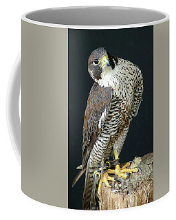The Proud Falcon Coffee Mug