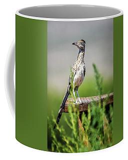 The Smug Roadrunner Coffee Mug