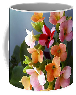 Coffee Mug featuring the photograph The Special One by Danielle R T Haney