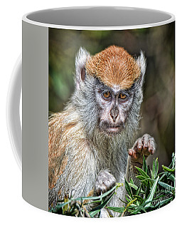 The Stare A Baby Patas Monkey  Coffee Mug