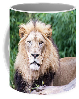 The Stare Down Coffee Mug