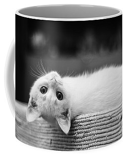 The White Kitten Coffee Mug