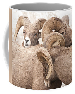 Three Bighorn Rams Coffee Mug
