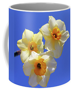 Coffee Mug featuring the photograph Three Daffodils by Judy Vincent