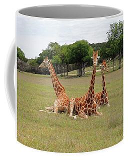 Three Giraffe At Fossil Rim Coffee Mug by Jayne Wilson