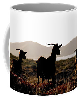 Coffee Mug featuring the photograph Three Goats by Pedro Cardona