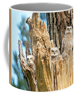 Three Great Horned Owl Babies Coffee Mug