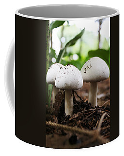Coffee Mug featuring the photograph Three Is Company by Bruce Bley