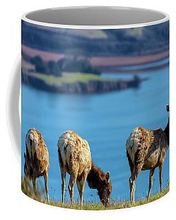 Coffee Mug featuring the photograph Three Lady Elks by Jonathan Nguyen