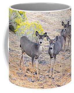 Three Mule Deer In High Desert Coffee Mug