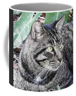 Coffee Mug featuring the photograph Thrinax by Sally Sperry
