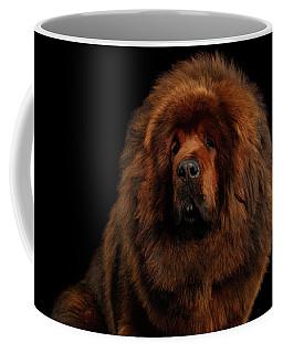 Tibetan Mastiff Coffee Mug by Sergey Taran