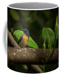 Tickell's Blue Flycatcher Coffee Mug