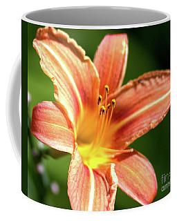 Tiger Bright Coffee Mug by Stephen Melia