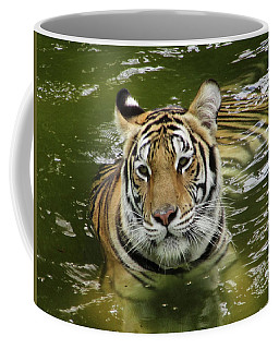 Coffee Mug featuring the photograph Tiger In The Water by Pamela Walton