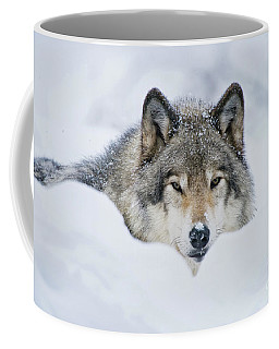 Timber Wolf Picture - Tw281 Coffee Mug