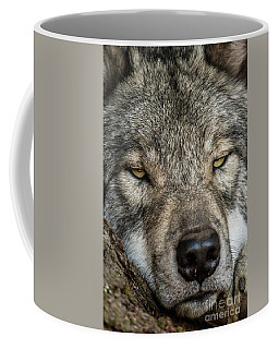 Timber Wolf Picture - Tw288 Coffee Mug