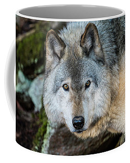 Timber Wolf Picture - Tw291 Coffee Mug