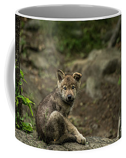 Timber Wolf Picture - Tw335 Coffee Mug