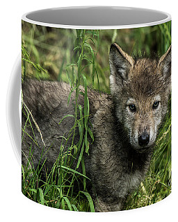 Timber Wolf Picture - Tw336 Coffee Mug