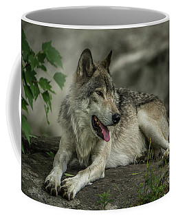 Timber Wolf Picture - Tw414 Coffee Mug