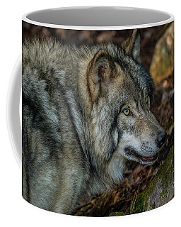 Timber Wolf Picture - Tw417 Coffee Mug