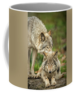 Timber Wolf Picture - Tw419 Coffee Mug