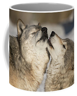 Timber Wolf Picture - Tw66 Coffee Mug