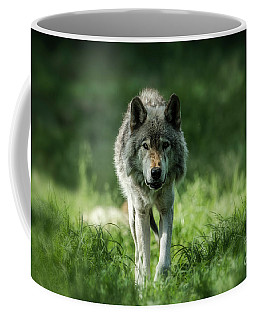 Timber Wolf Picture - Tw69 Coffee Mug