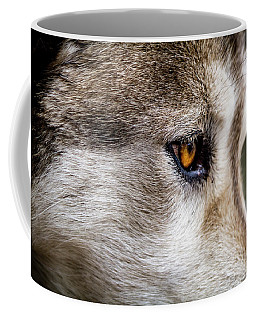 Timber Wolf Stare Coffee Mug