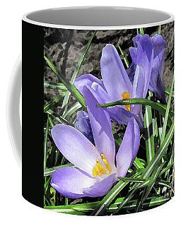 Time For Crocuses Coffee Mug
