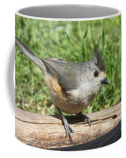 Titmouse Close Up Coffee Mug
