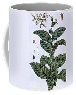 Tobacco Plant Coffee Mug