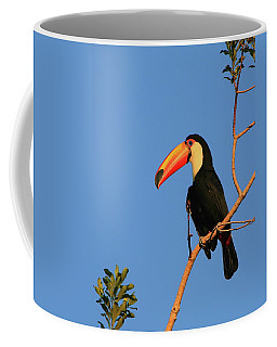 Toco Toucan Coffee Mug