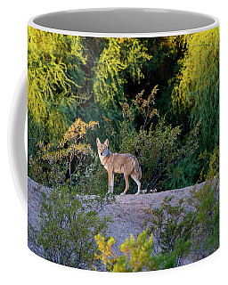 Today's Coyote Coffee Mug