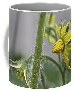 Tomato Babies 3 Coffee Mug