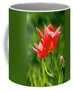 Toronto Tulip Coffee Mug by Steve Karol