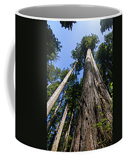Towering Redwoods Coffee Mug