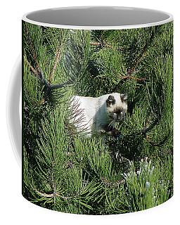 Tree Bandit Coffee Mug by Shirley Heyn