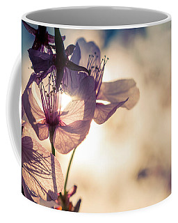 Tree Blossoms Backlit By The Afternoon Sun Coffee Mug