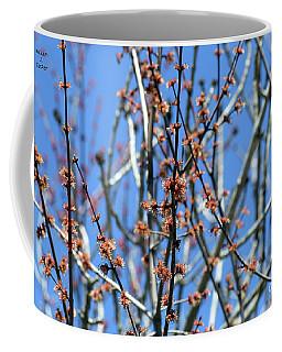 Tree Bud Closeup Coffee Mug