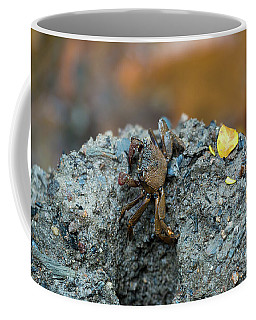 Tree Climbing Crab At Wetlands Coffee Mug